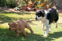 clancy and marley meet rusty-4